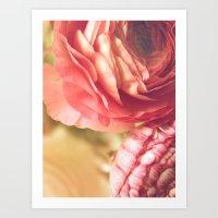 Vintage Ranunculus Art Print