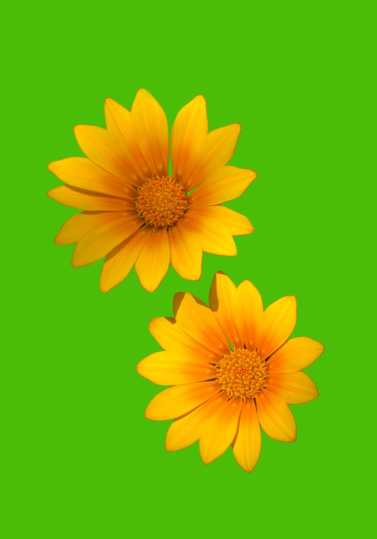 Two Yellow Flowers on Funky Green Background Art Print