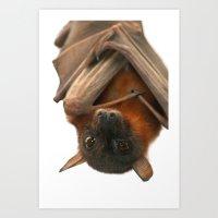 Little Red Flying Fox Ha… Art Print