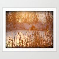 Winter Swamp Sun Rays Art Print