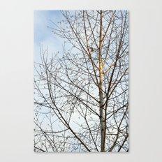 Birch Tree 9781 Canvas Print