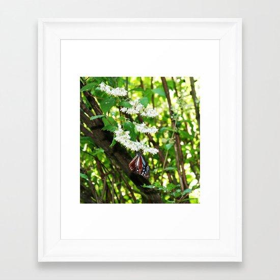 Japanese Butterfly Framed Art Print