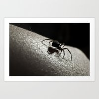 Shadow Of A Spider Art Print