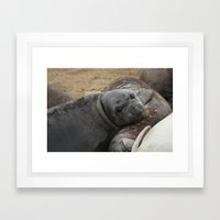 elephant seal pup Framed Art Print