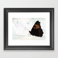 Large Tortoiseshell - Pr… Framed Art Print