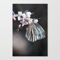 butterfly #2 Canvas Print