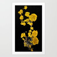 Yellow Lichen Art Print