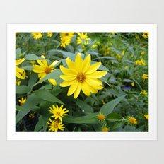 Woodland Sunflowers Art Print