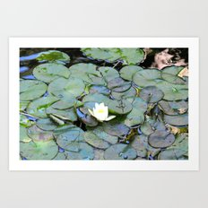 Raindrops in my pond Art Print