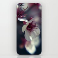 Plum Blossom iPhone & iPod Skin