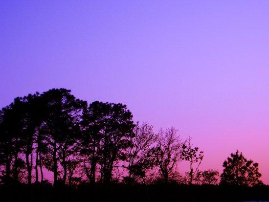 Simple Sunset Canvas Print