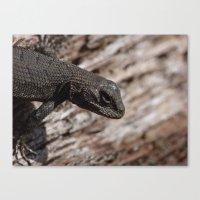 Lizard Fall 2015 Canvas Print