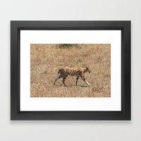 Serval Cat  Framed Art Print