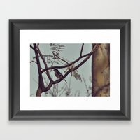 DSC_0617 Framed Art Print