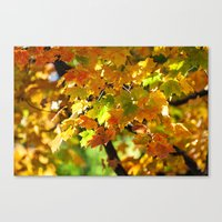 In October Canvas Print