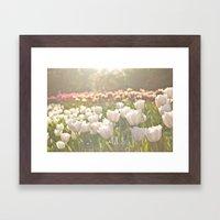 Tulips sunbathed Framed Art Print