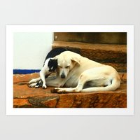 Like Cats And Dogs Art Print
