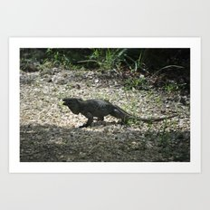 Blue Iguana Art Print