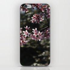 Sunlit Cherry Blossoms iPhone & iPod Skin