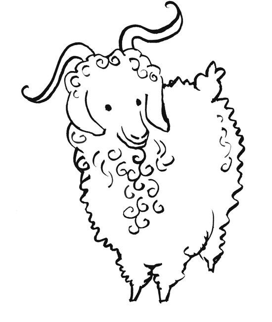 Angora Goat Art Print