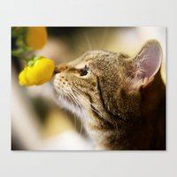 Tabby and the Flower Canvas Print