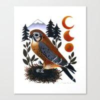 The Blue Ridge Kestrel Canvas Print