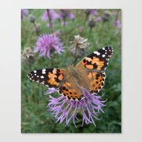 Painted Lady Butterfly Canvas Print