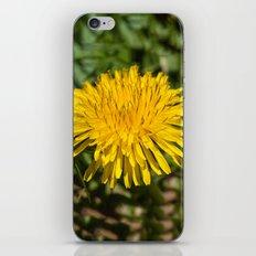 Taraxacum iPhone & iPod Skin