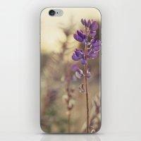 Purples iPhone & iPod Skin