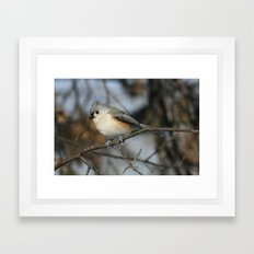 Tufted Titmouse Bird Framed Art Print