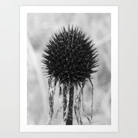 Dead Cone Flower Art Print