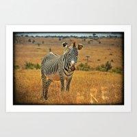 zebra Art Prints featuring Zebra by minx267
