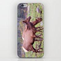 Snoqualmie Valley Elk iPhone & iPod Skin
