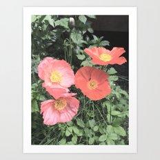 Papaveraceae Art Print