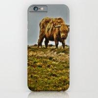 Highland Cow iPhone 6 Slim Case