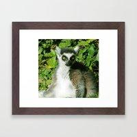 Ring Tailed Lemur Closeu… Framed Art Print