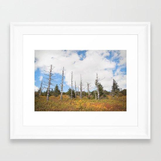 Trees in Mt. Rogers, Virginia Framed Art Print