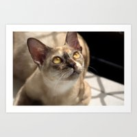 Study of a Cat Art Print