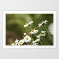 Daisy Chain 3 Art Print