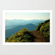 Flowering Balsam Root on Dog Mountain, Columbia River Gorge, Oregon Art Print