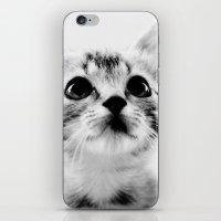 Sweet Kitten iPhone & iPod Skin