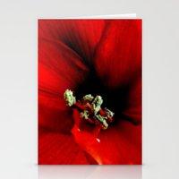 Red Amaryllis Stationery Cards
