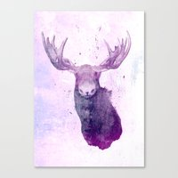 Moose Springsteen Canvas Print
