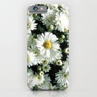Daisy Dandy iPhone 6 Slim Case