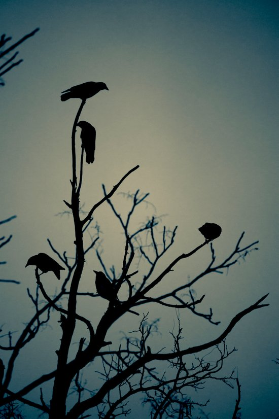 Crows Silhouette Art Print