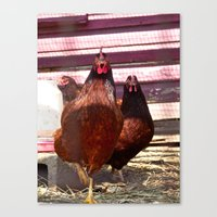 Hens in the House Canvas Print