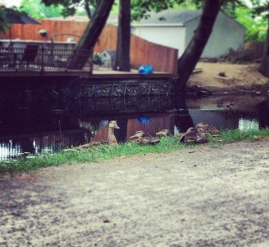 Sitting Ducks Art Print