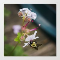 Being A Bee Canvas Print