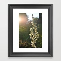 Dream of Sunlight Framed Art Print