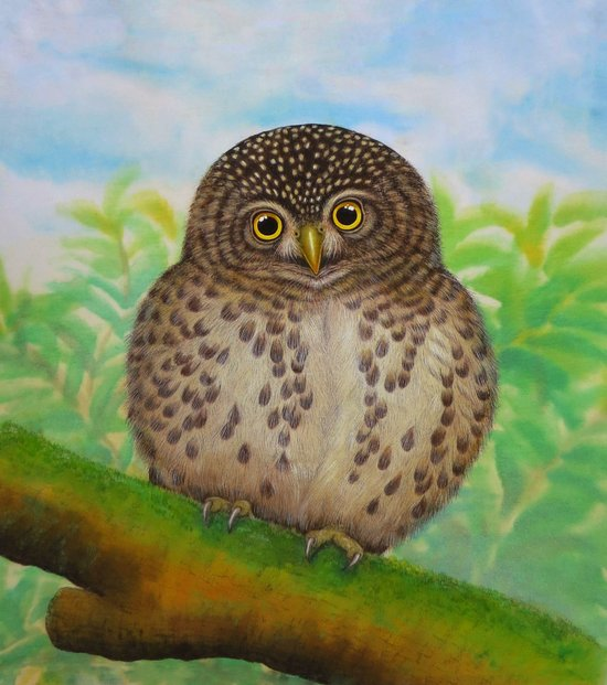 Collared Owlet Canvas Print